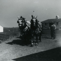 Two Horses and a Man in Front of a Chicken Coup