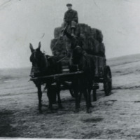 Horse-Drawn Wagon Carrying Hay Bales.