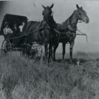 Buggy with Three Passengers  Pulled by Two Horses