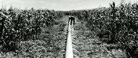 Irrigation (timeline image)